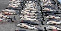 dead whales copy